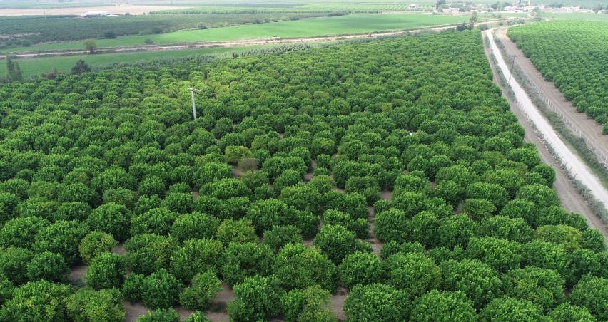 TARSİM'den çiftçilere 5,4 milyar TL ödeme