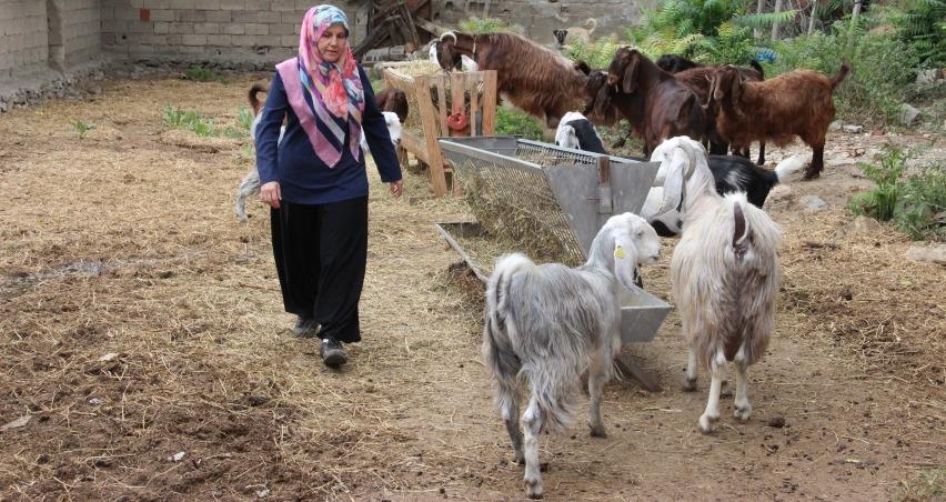 Girişimci kadın, keçi sütü ve peyniri üretiyor