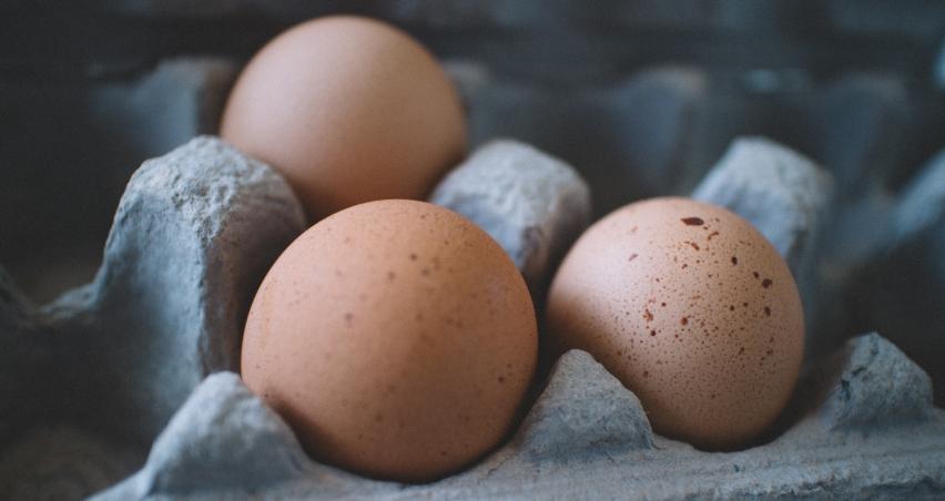 Temmuz ayında yumurta üretimi arttı