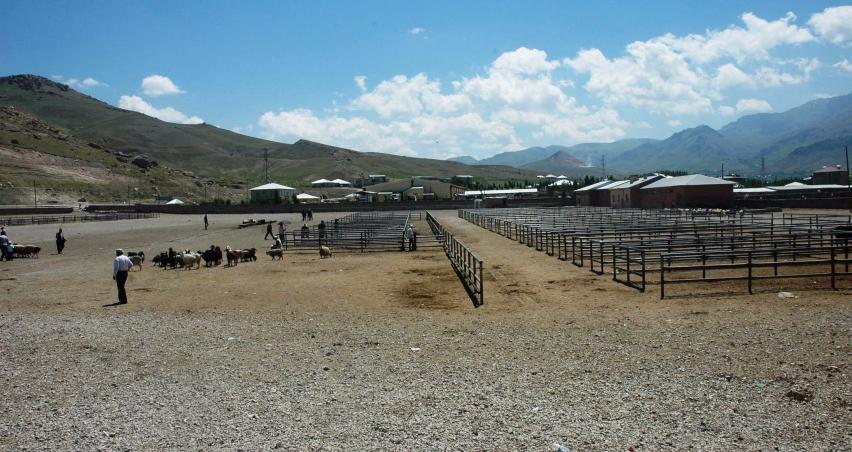 Et fiyatları canlı hayvan pazarını vurdu