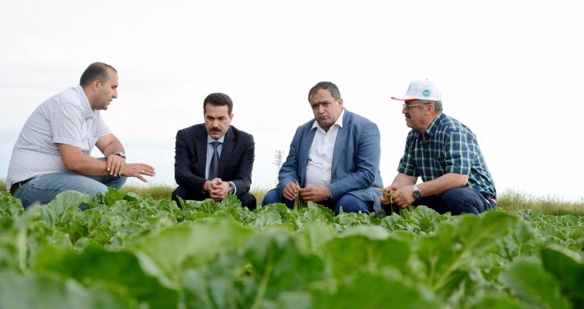 Türkiye'de pancar üretiminde Aksaray'ın önemi büyük