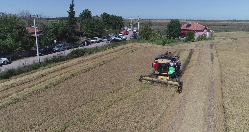 2019 yılı çeltik hasadı; 2,8 milyon TL kazanç sağlandı