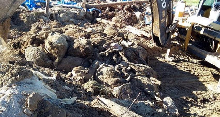 520 hayvan çatı altında telef oldu!