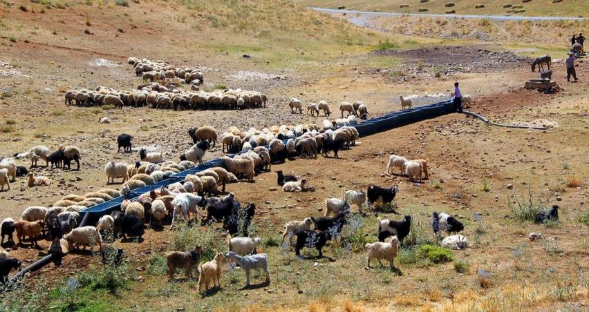 Van'da tarım ve hayvancılığı geliştirecek büyük hamle