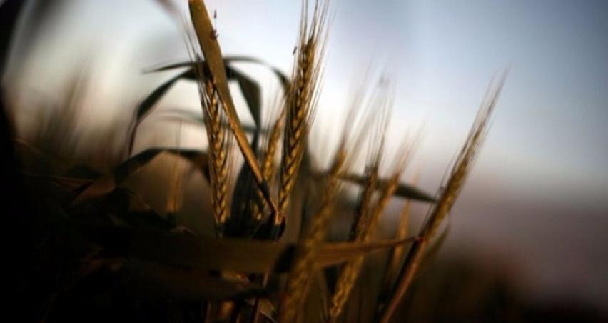 İklim değişikliği buğday üretimini vurdu