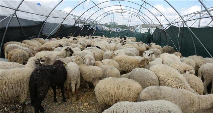 Çoban istihdamına 62 milyon lira destek