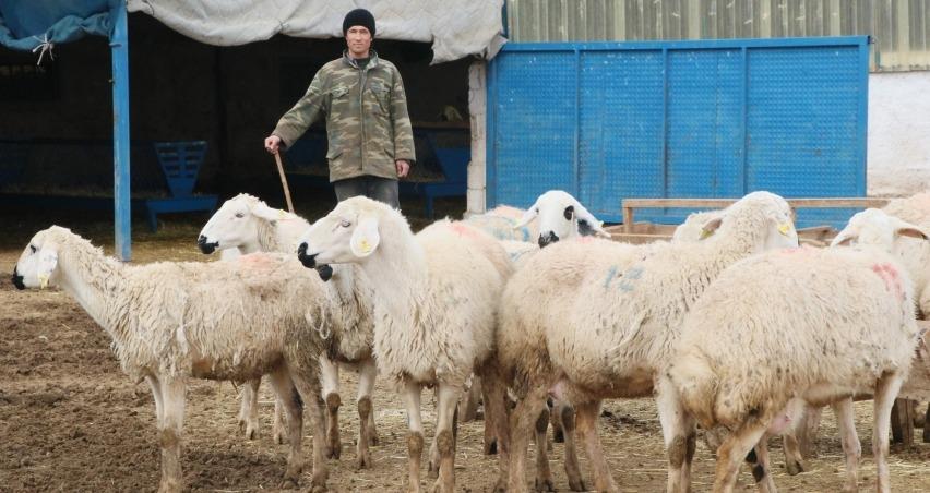 Çobanlara 2 milyon TL destek ödemesi yapılacak