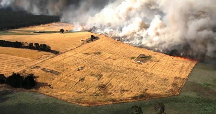 Tarihin en büyük orman yangınında 480 milyon hayvan öldü