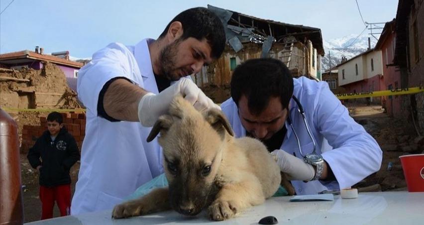 Gönüllü veterinerler depremden etkilenen hayvanları tedavi etti