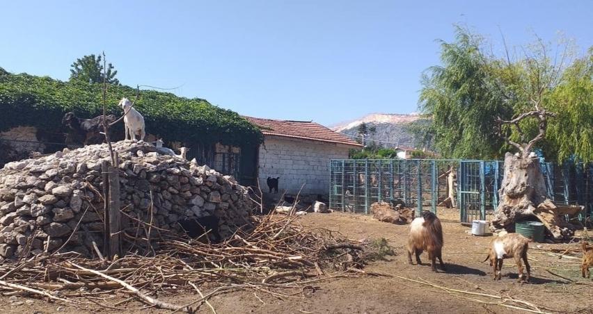 Personele borcu olan belediye, hayvanları satışa çıkardı