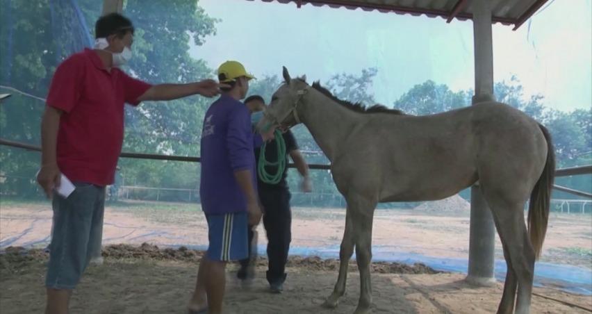 Tayland'da Afrika at vebası salgını patlak verdi