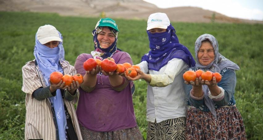 Ankara'da çiftçilere 5 milyon fide desteği