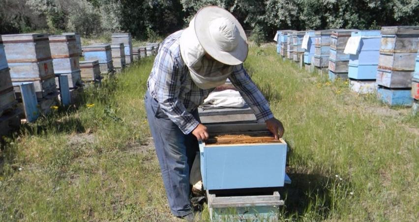 Arıcılara alet ekipman hibe desteği verilecek