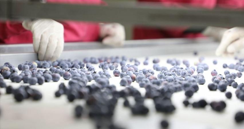 Antalya'dan Hong Kong'a 'yaban mersini' ihracatı