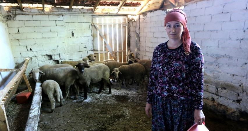 İki üniversite mezunu 4 dil biliyor ve hayvancılık yapıyor