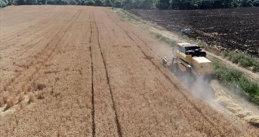 Üreticilere yüzde 75 hibe desteğiyle 6 bin 100 ton tohum dağıtıldı