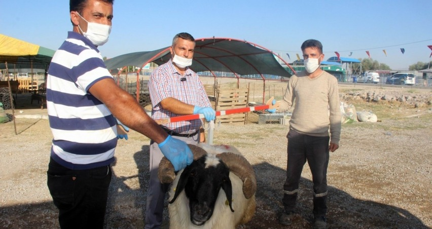 Kayseri'de 41 bin 18 adet kurban kesildi