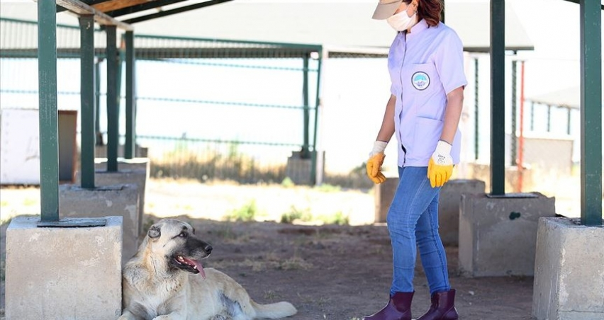 Trafik kazası mağduru köpeklere özenli koruma