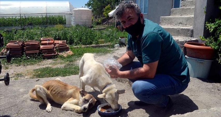 Veteriner hekimden sokak hayvanları için 'askıda mama' uygulaması