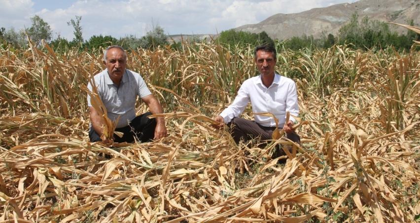 Erzincanlı çiftçilerin feryadı; '5 gündür tarlamıza su veremiyoruz'