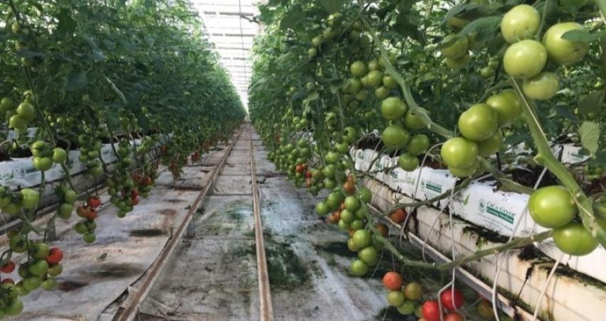 Tarım organize sanayi bölgelerinde nelere dikkat edilmeli?