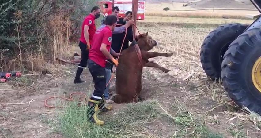 Kırıkkale'de kuyuya düşen düve kepçeyle çıkarıldı