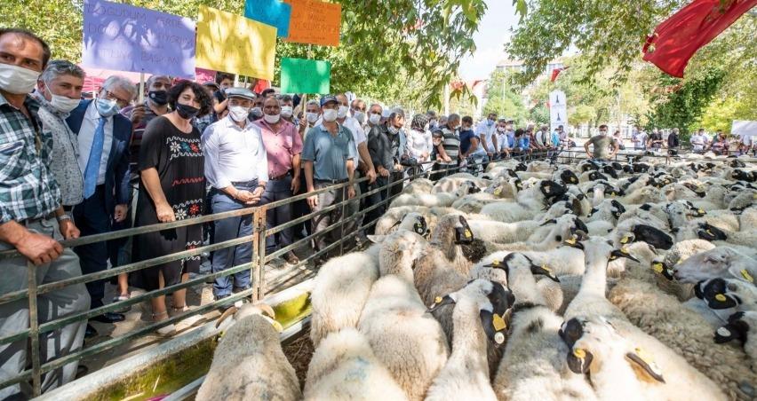 16'sı kadın 84 çiftçiye 336 küçükbaş hayvan dağıtıldı