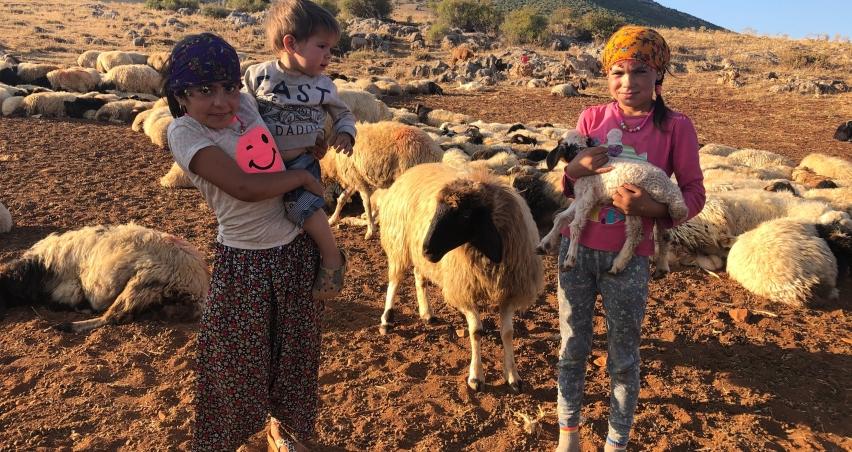 Koyunların peşinde hayallerine koşuyorlar