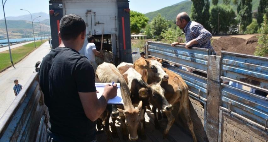Genç çiftçiler hayvanlarını aldı
