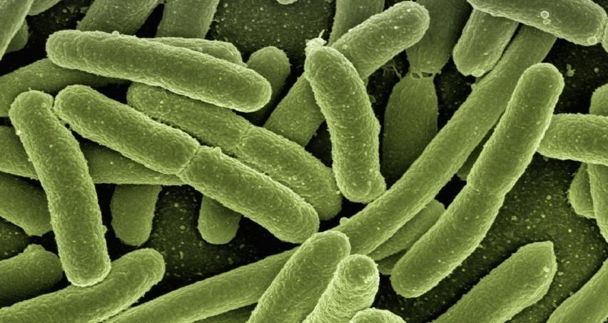 E. Coli bakterisi nedir? Sonuçları nasıl önlenir?