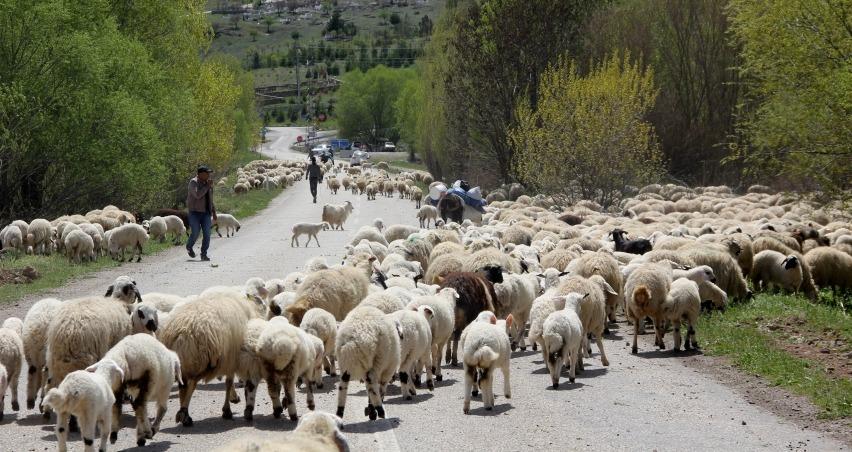 Yayla mesaisini tamamlayan Doğu Anadolu'daki göçerler dönüş yolunda