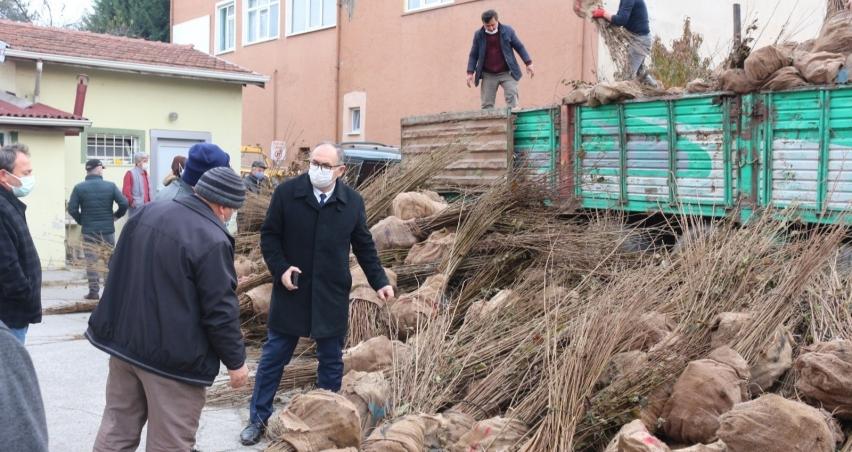 Çiftçilere fındık fidanı dağıtımı yapıldı