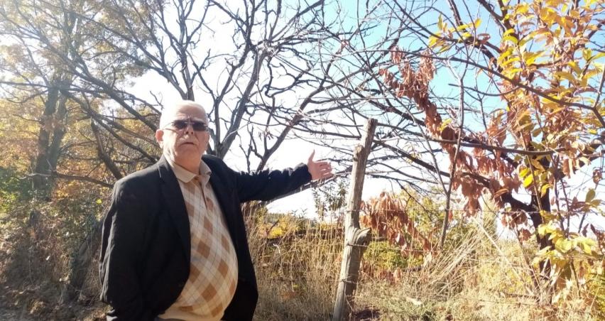 Kestane dal kanserine çare bulunamadı, rekolte her geçen gün düşüyor