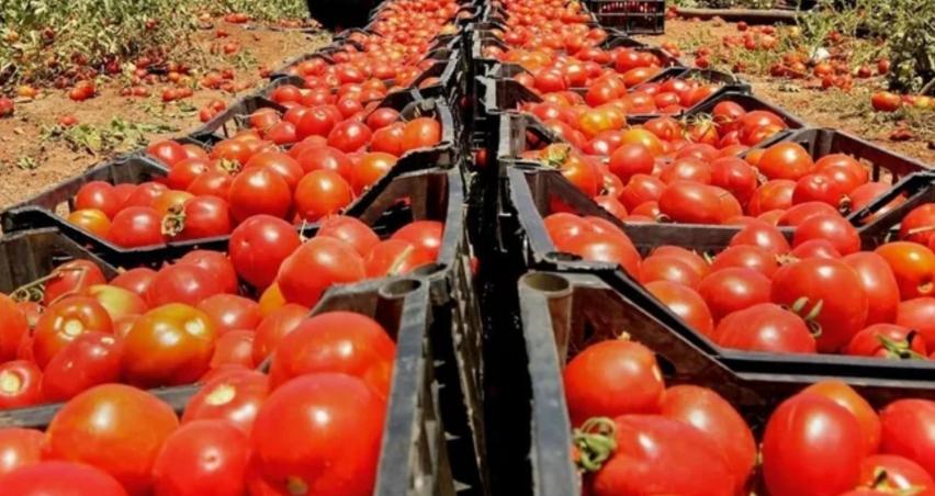 Rusya domates kotasını arttırabilir