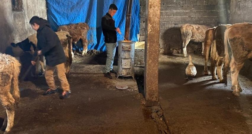 Büyükbaş hayvanlarını dondurucu soğuklardan korumak için ahıra soba kurdu
