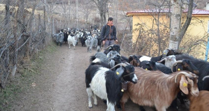 Genç çobanın hedefi veteriner hekim olmak
