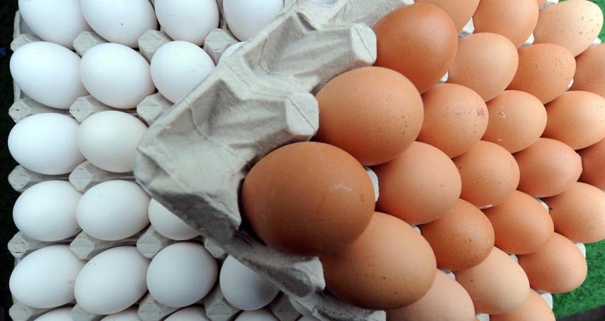 Belçika'dan Hollanda'ya yumurta suçlaması
