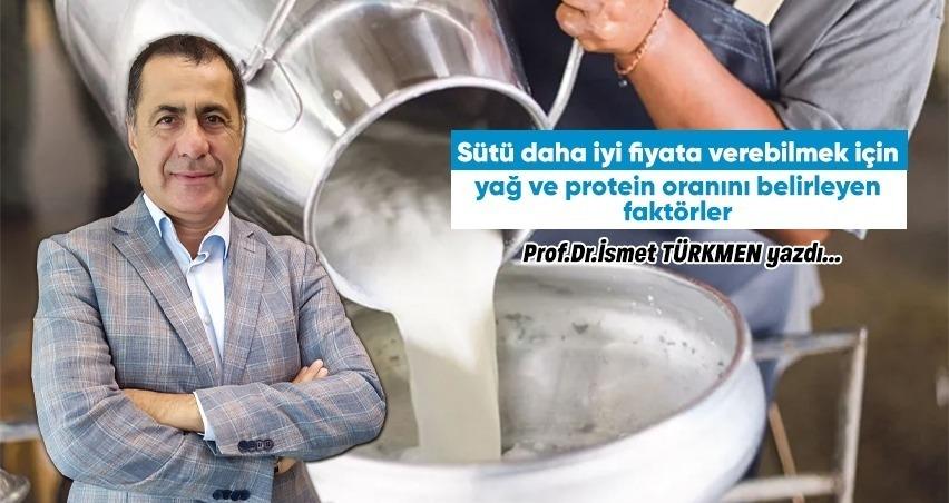 Süt yağ oranı ve proteini nasıl artar?