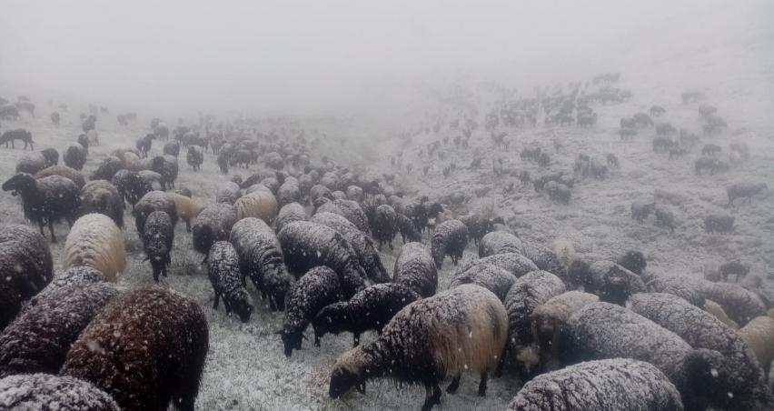Yaylada sürü sahiplerine kar sürprizi
