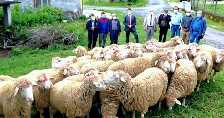 Koyun projesi köye dönüşü başlattı