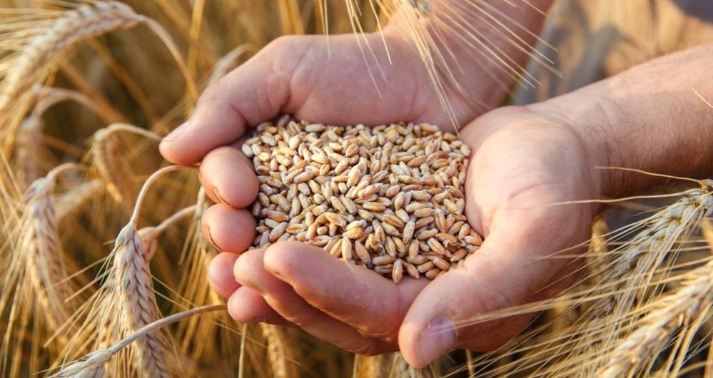 TMO'dan iki haftada 1,5 milyon ton buğday ve arpa ithalatı