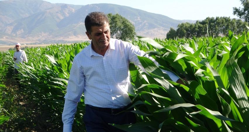 Ottan beklenen verimi alamayan çiftçi silajlık mısıra yöneldi