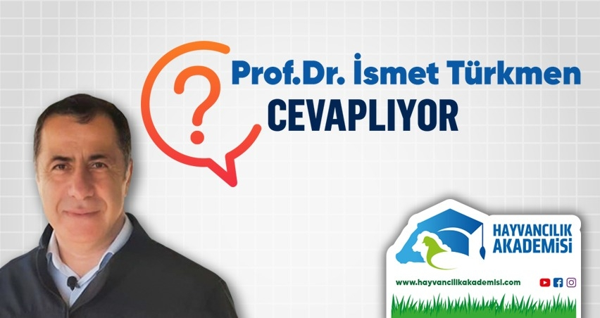 Prof. Dr. İsmet Türkmen Cevaplıyor - Ketozis