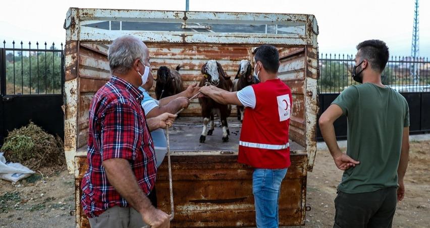 Kızılay'dan yangında zarar gören ailelere küçükbaş hayvan yardımı