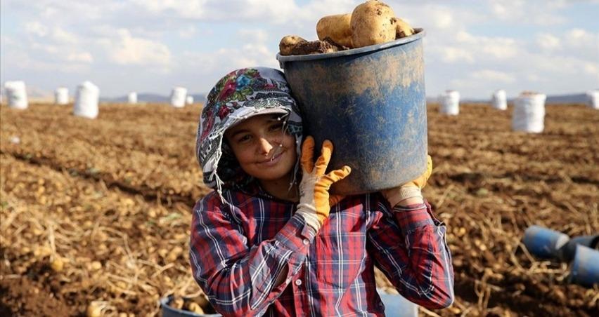 Yerli tohumluk patates kuraklığa rağmen verimiyle üreticisini sevindirdi