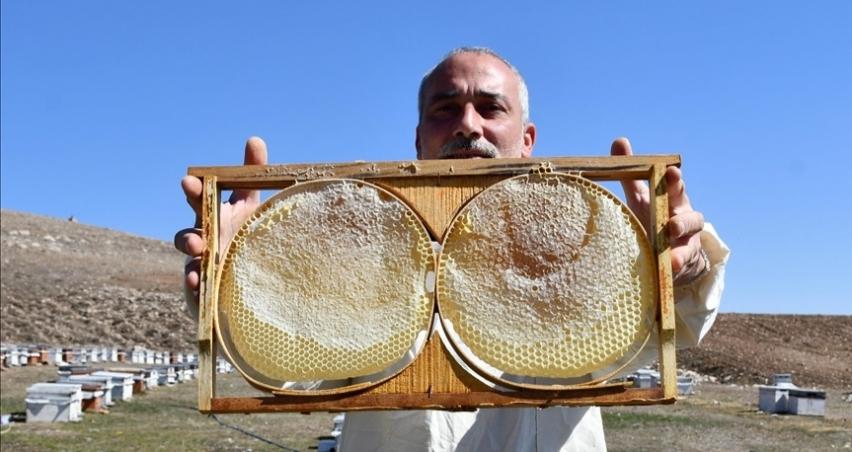 Hobisini kazanca dönüştüren girişimci yılda 7 ton bal üretiyor