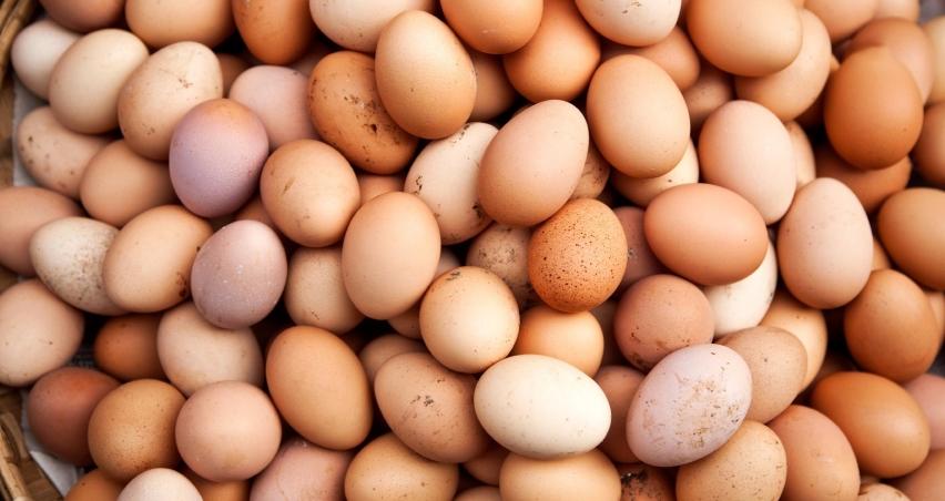 Yumurtada büyüme çift haneli rakamlara ulaştı
