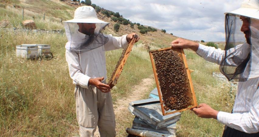Arıcıların sıkıntısı büyük