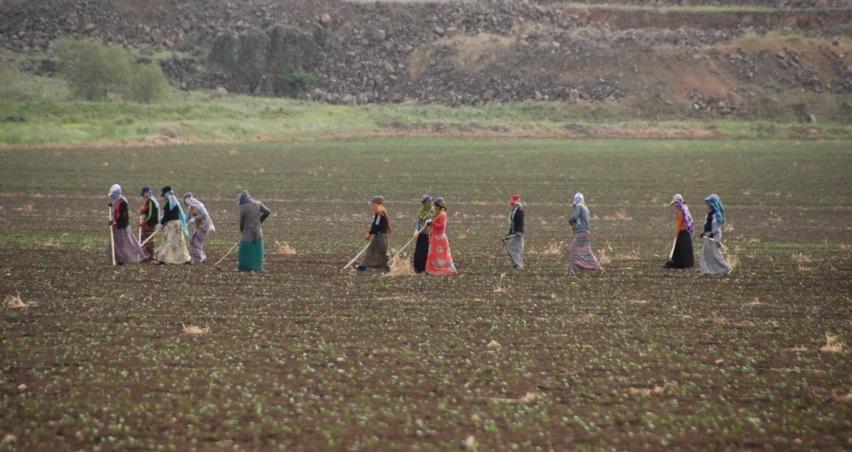 Tarımda istihdam 150 bin kişi arttı