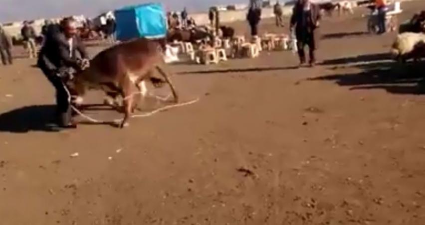 Hayvan pazarını birbirine kattı!